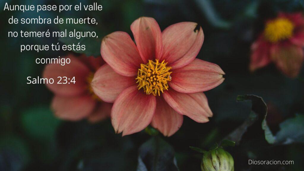 Salmo 23 para Enfermos